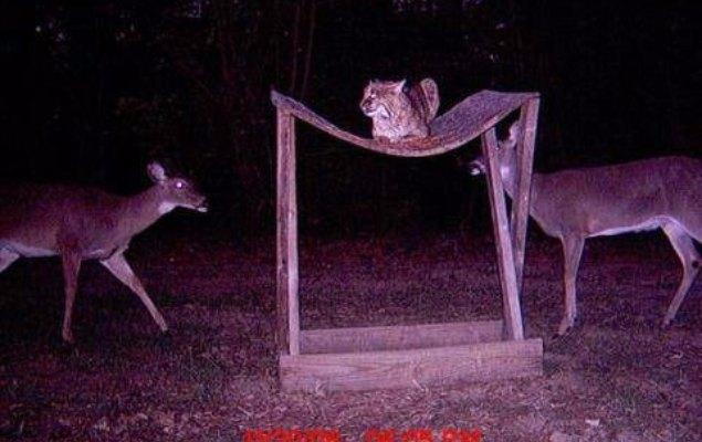 Unedited Wildlife Photos Captured By Trail Cams  U2013 Page 58
